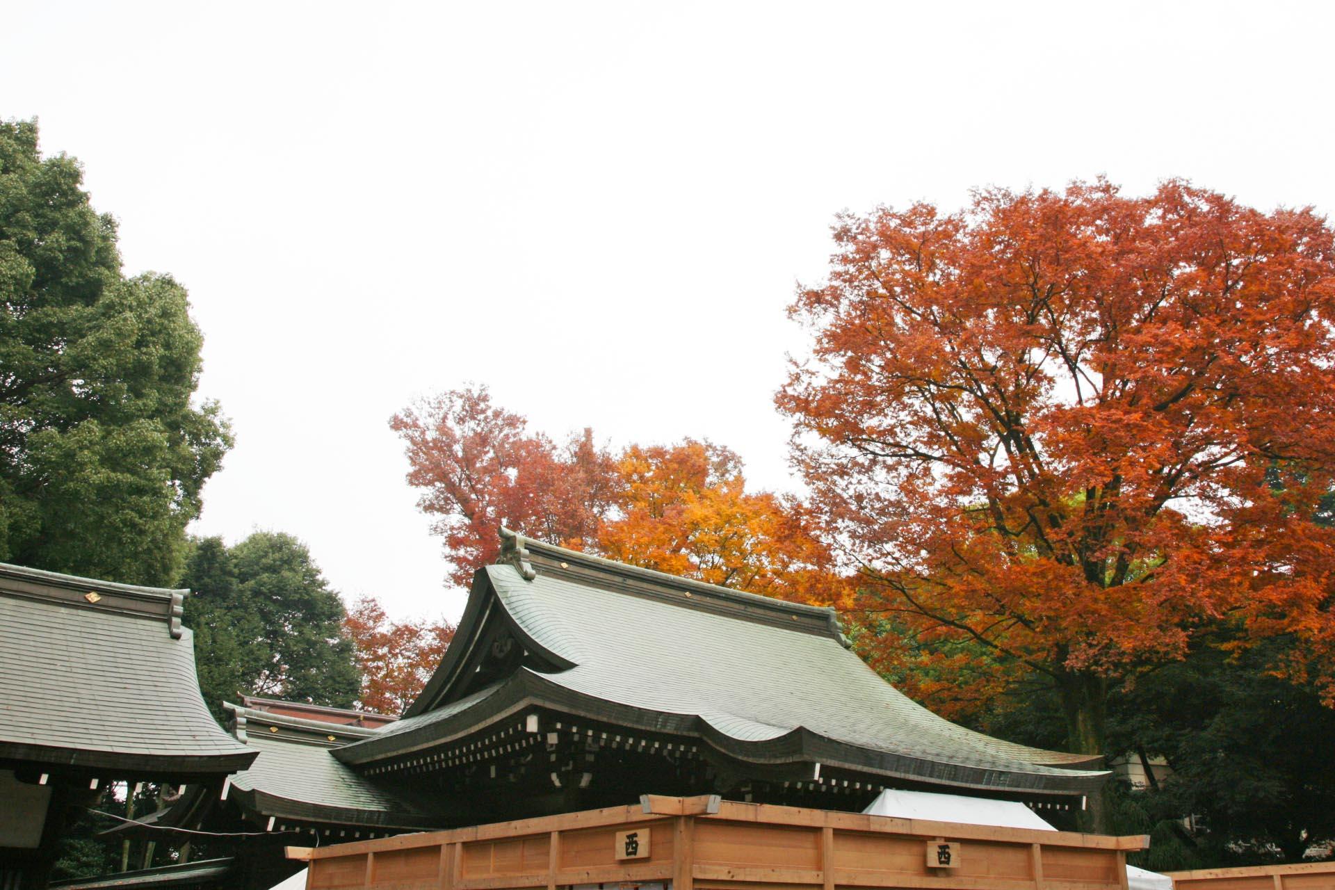 秋の川越氷川神社 埼玉の風景
