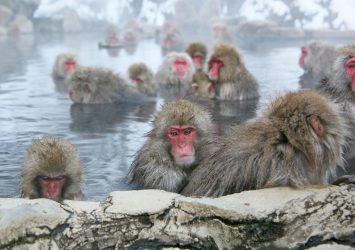 冬の地獄谷温泉 長野の風景