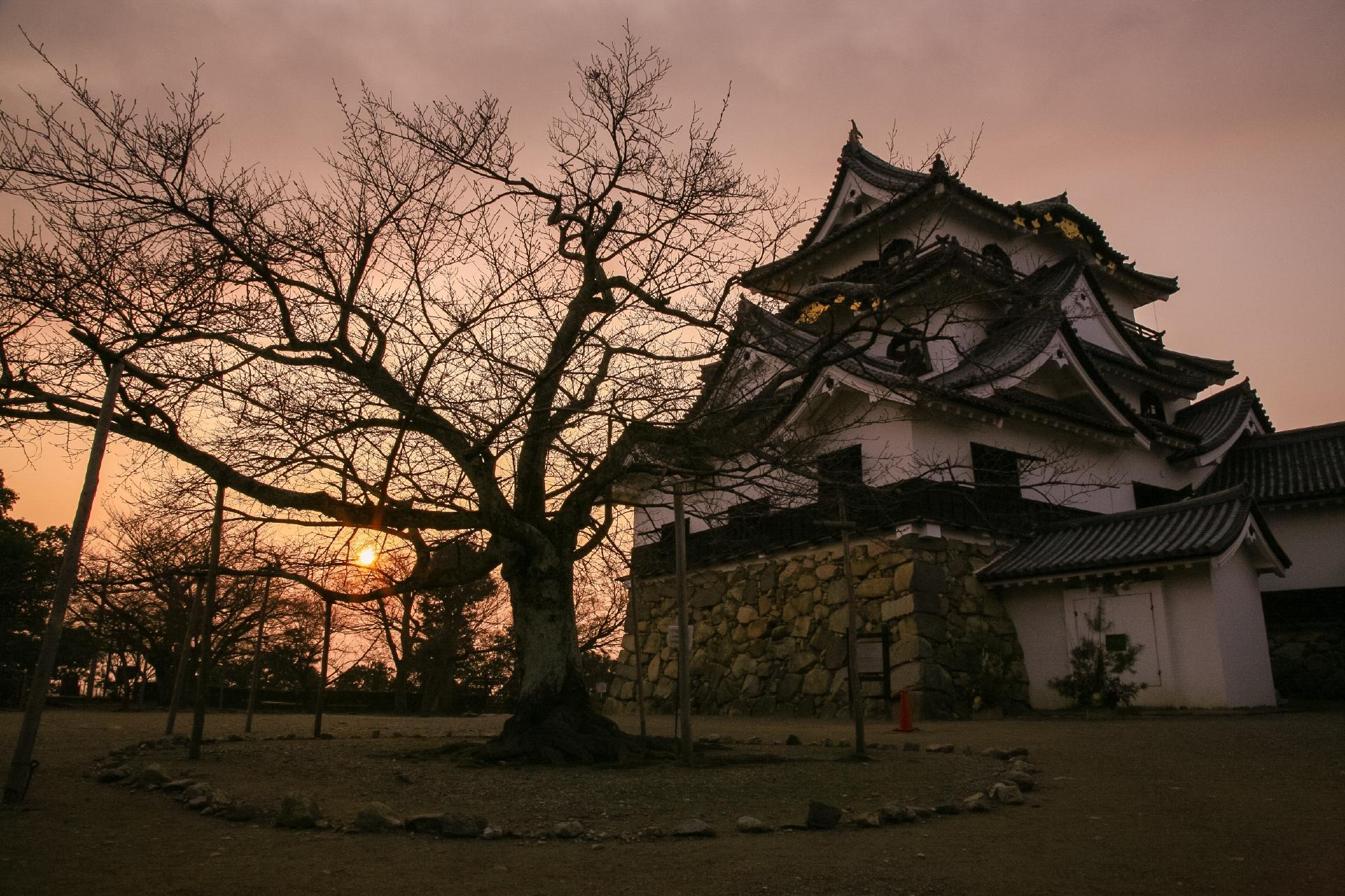 冬の夕暮れの彦根城 滋賀の風景