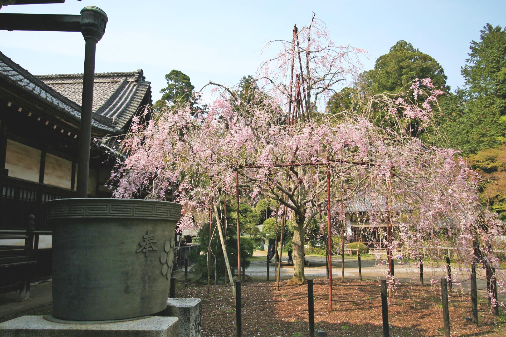 春の観福寺 千葉の風景