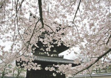 春の興福寺 奈良の風景