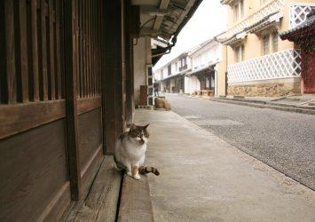 小雪の舞う内子町 愛媛の風景
