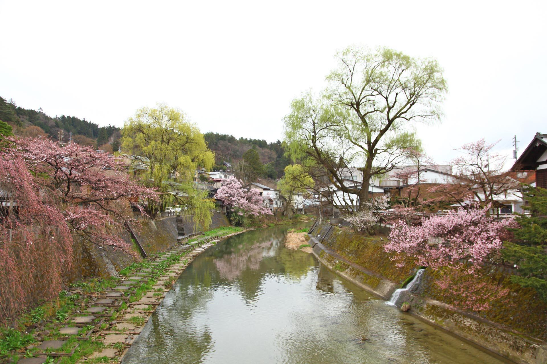 春の飛騨高山 岐阜の風景