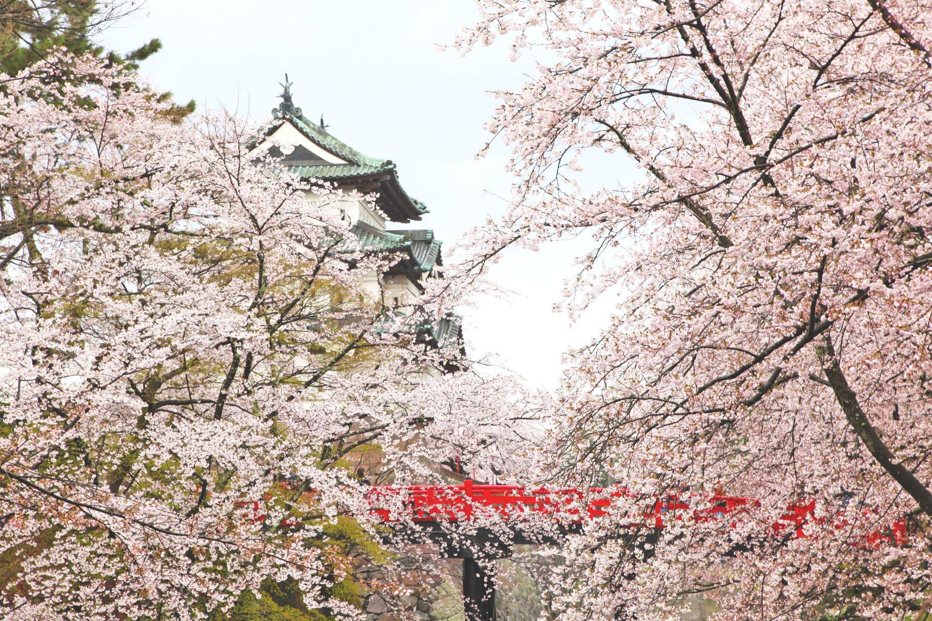 弘前城と満開の桜 青森の風景