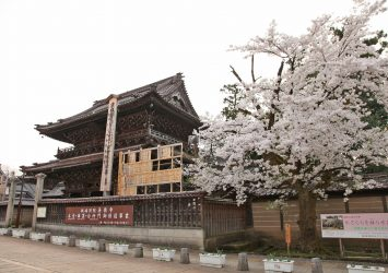 善徳寺と桜 富山の風景