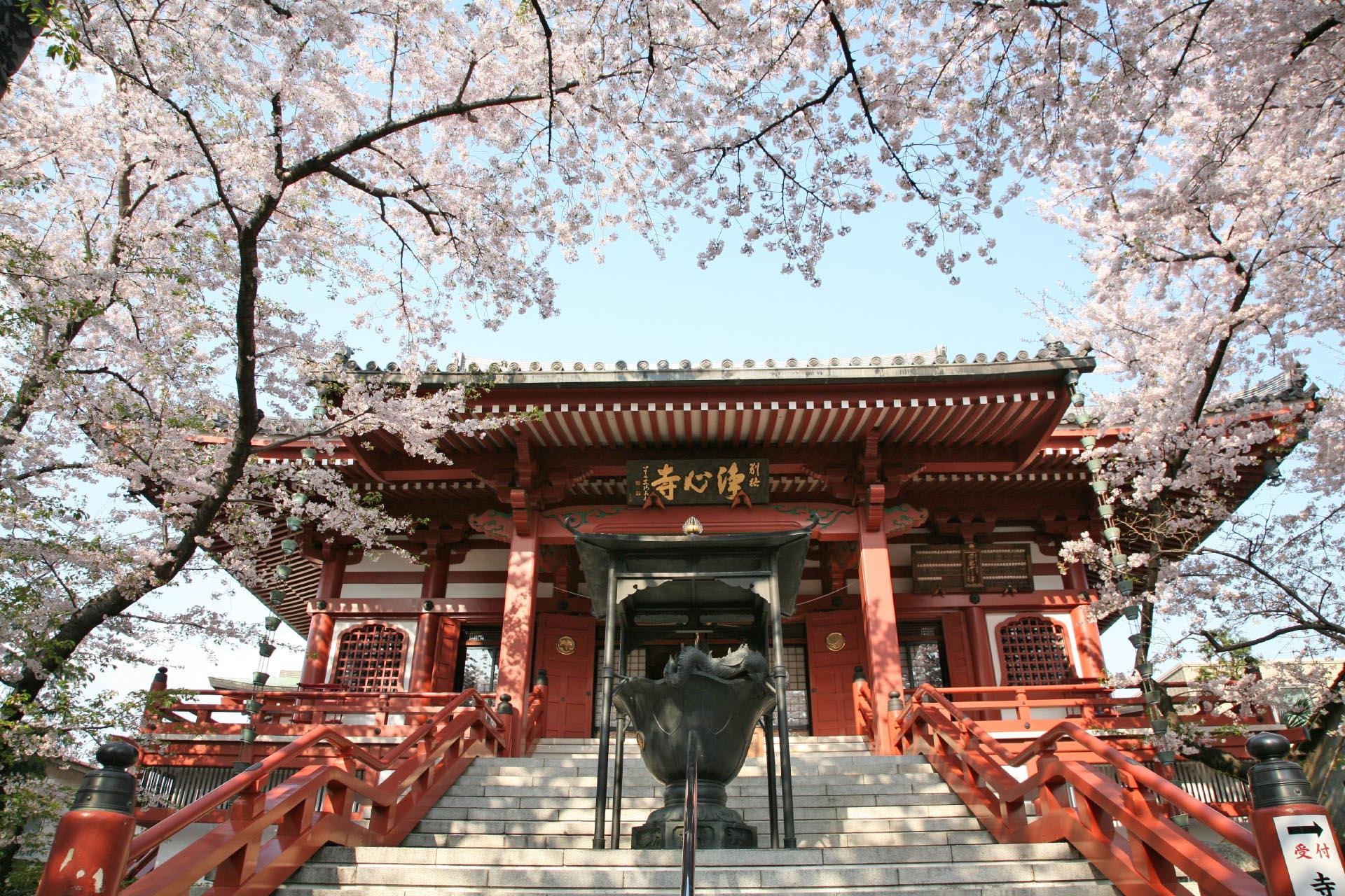 浄心寺の桜の風景 東京の風景