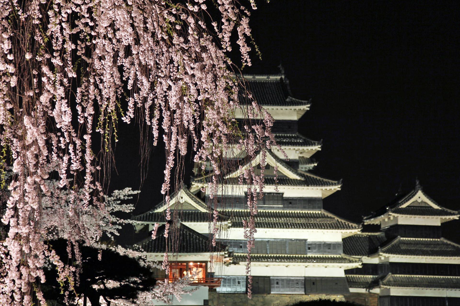夜の松本城と桜の風景 長野の風景