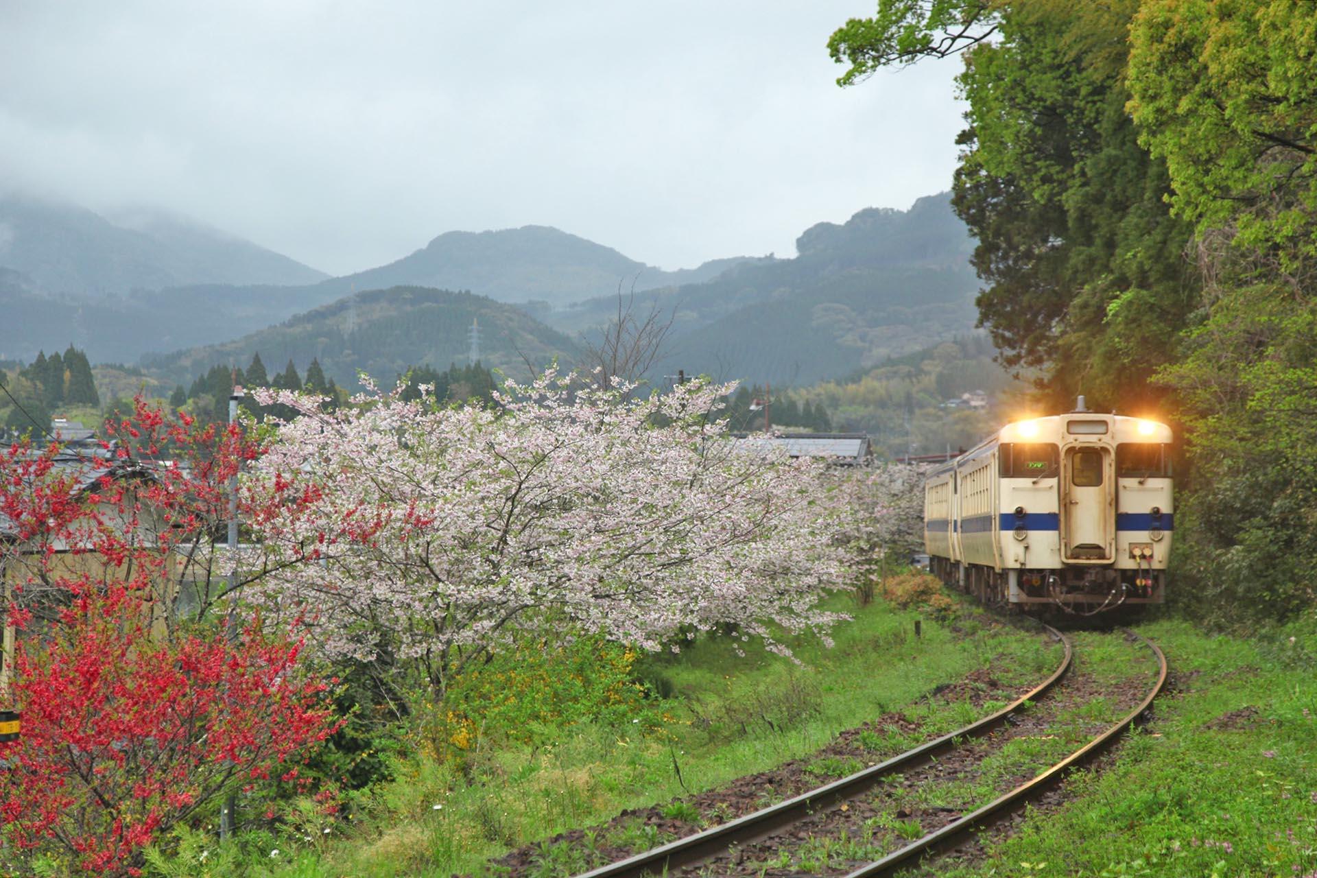 春の飫肥 宮崎の風景