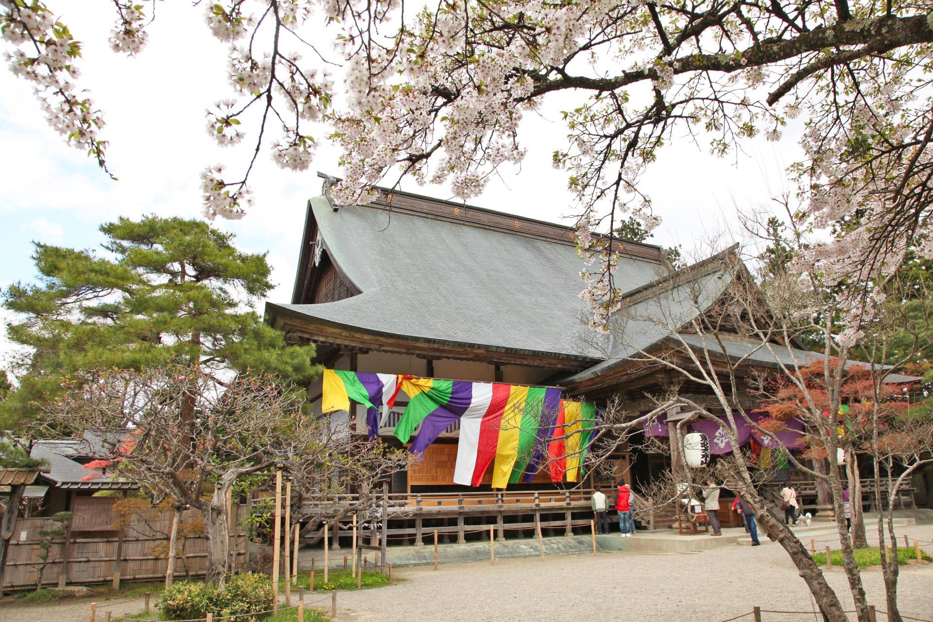 中尊寺の桜 岩手の風景