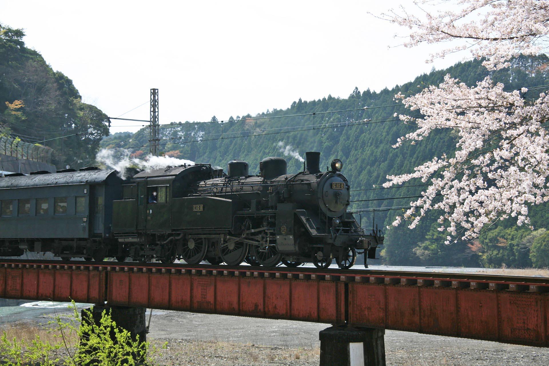 桜と大井川鉄道 静岡の風景