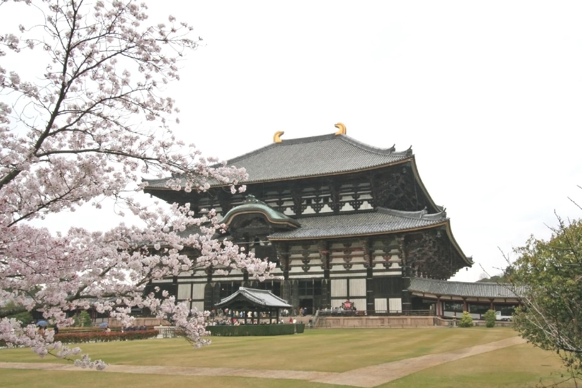 桜と東大寺 春の奈良の風景