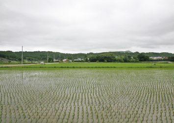 梅雨の風景 福江島 長崎の風景