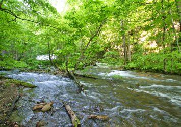 6月の奥入瀬渓流  青森の風景