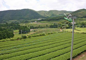 知覧の茶畑 鹿児島の風景