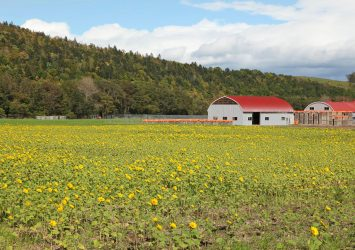 10月初旬の北見の風景 北海道の風景