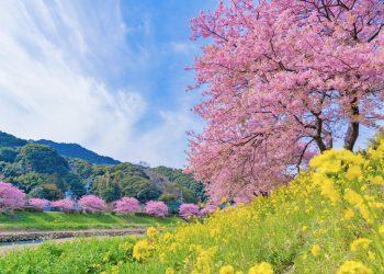 春の風景 河津桜 静岡の風景